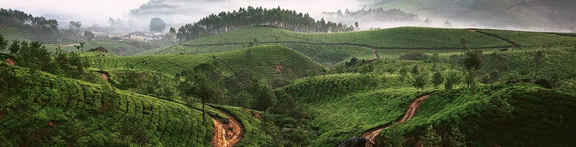 I Asien har man kryddat sin  mat med dessa rötter länge.
